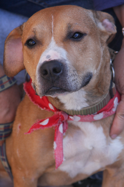 Amber- Lucky Dog Rescue's Web Page