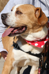 BJ - Lucky Dog Rescue NEEDS FOSTER's Web Page