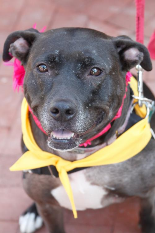 Mitzy- Lucky Dog Rescue's Web Page