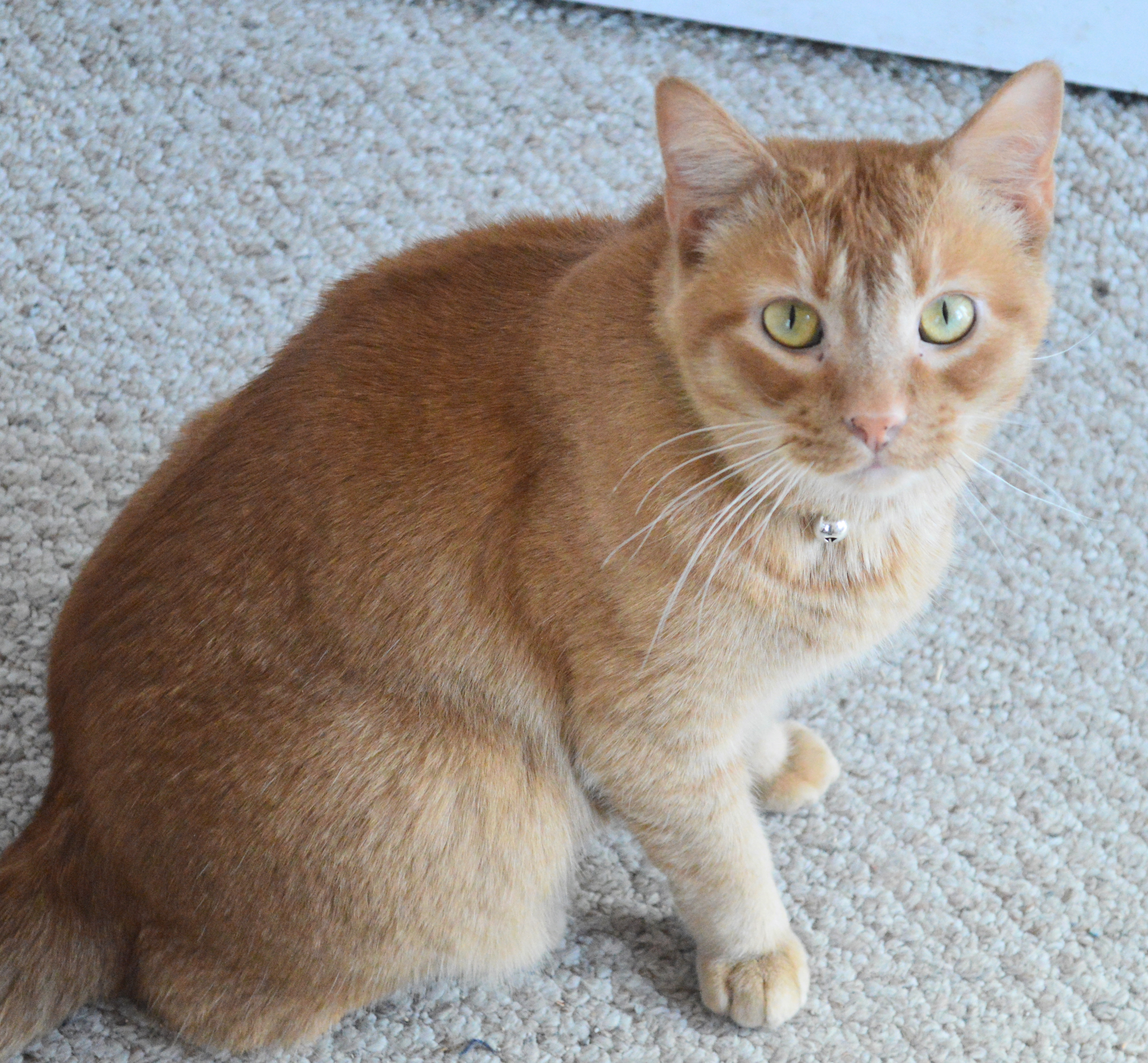 Oliver-ADOPTED's Web Page