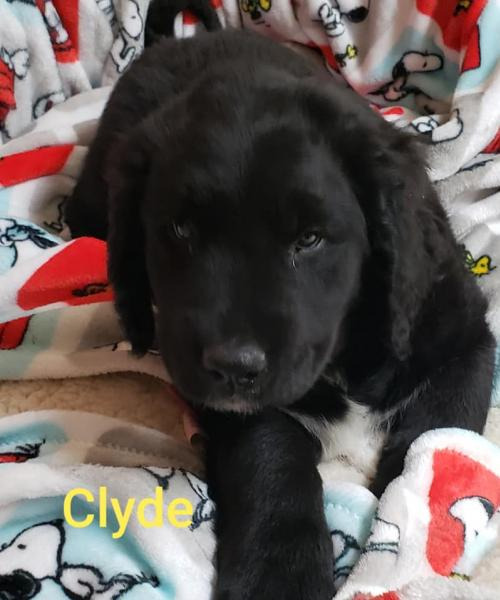 Clyde - LAB