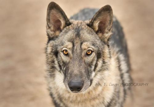 Coyote S Web Page
