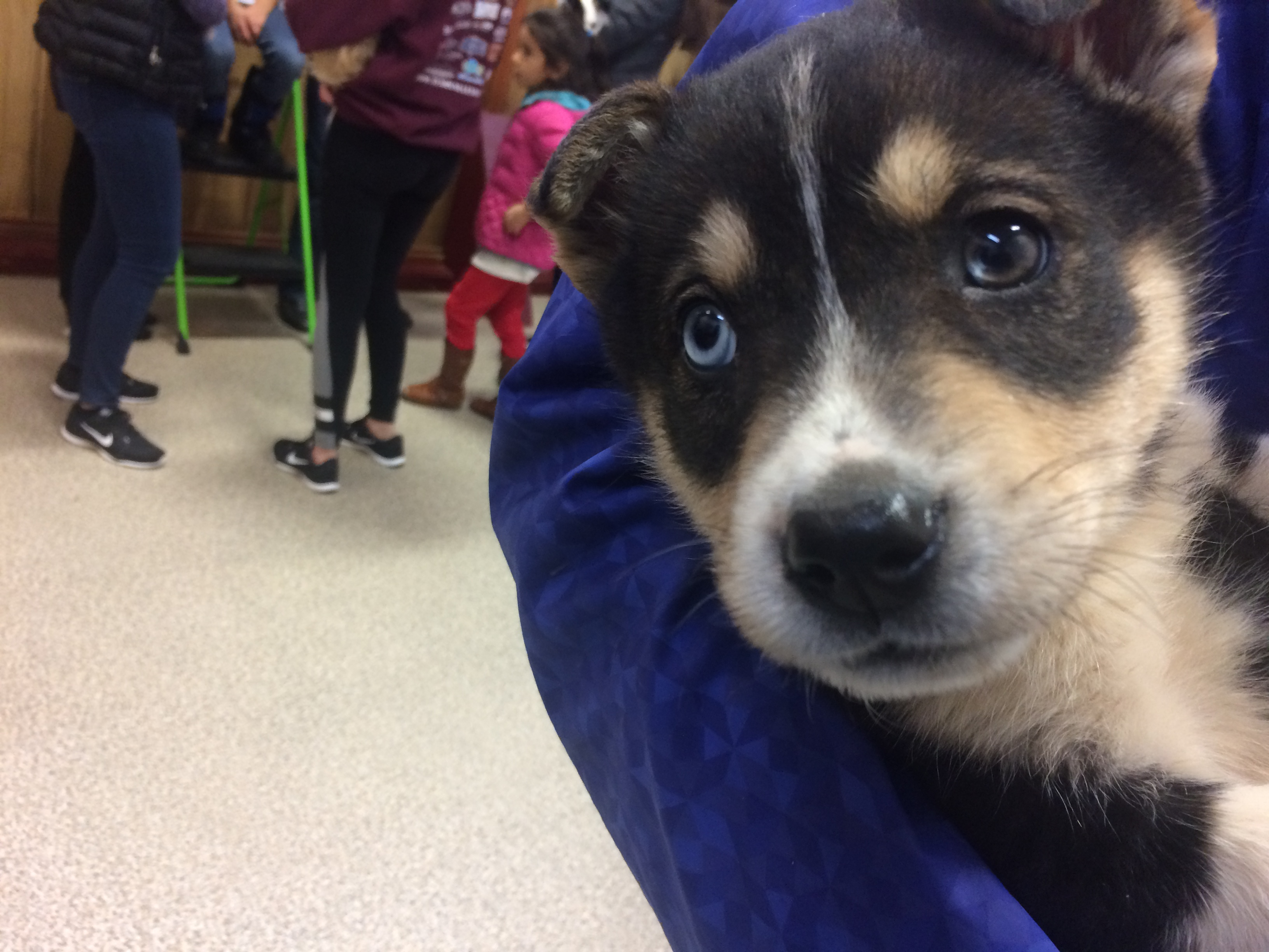 Dog Rescue Groups In Anchorage