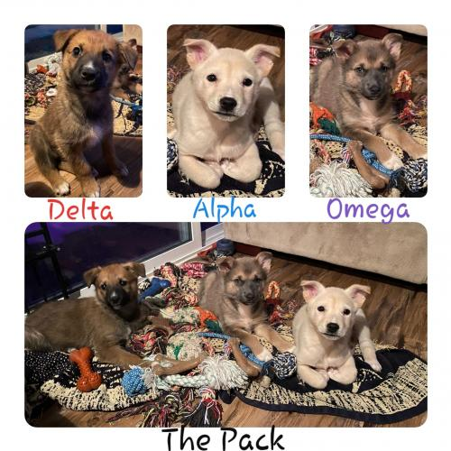The Pack Litter