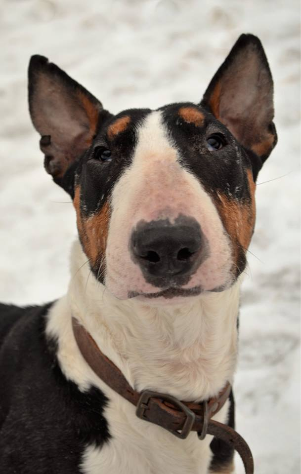 Dog Rescue Groups Anchorage