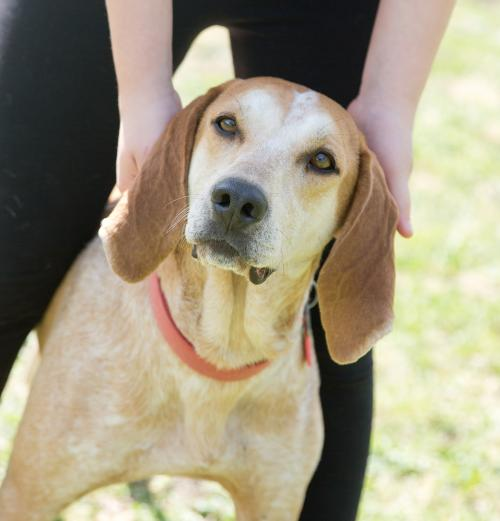 Willow *Help, I need a foster home!*