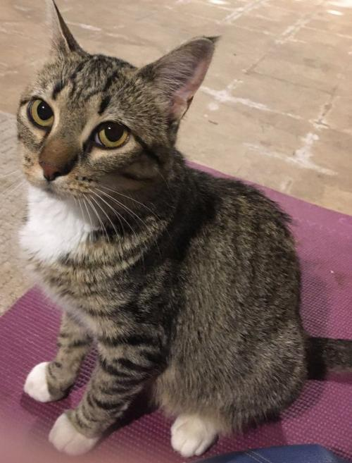 Willow (the kitty) Help! I need a foster home!
