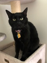Sable (MUST BE ADOPTED WITH SOX)