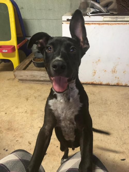 Adoptable Dogs - Dog Gone Seattle