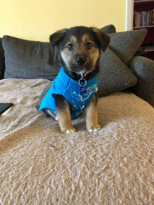 Adoptable Dogs Dog Gone Seattle