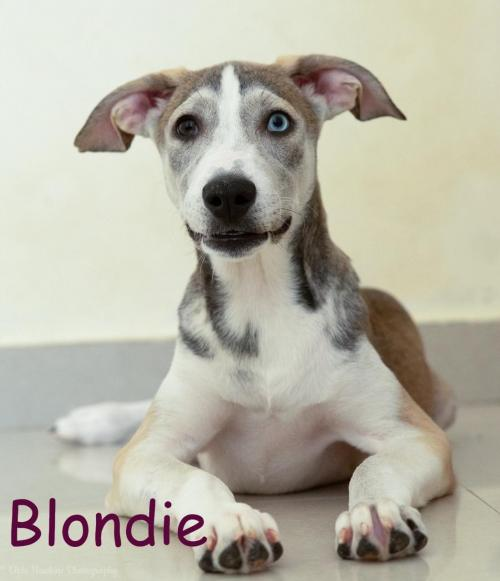 Our Adoptable Dogs - Northstar Pet Rescue