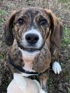 adoptable Dog in  named 2101-0535 Bradford (Available 1/23)