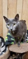 adoptable Cat in , MS named Eve