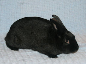 Black Pearl (bonded to Shadow)