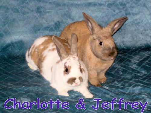 Charlotte (bonded to Jeffrey)