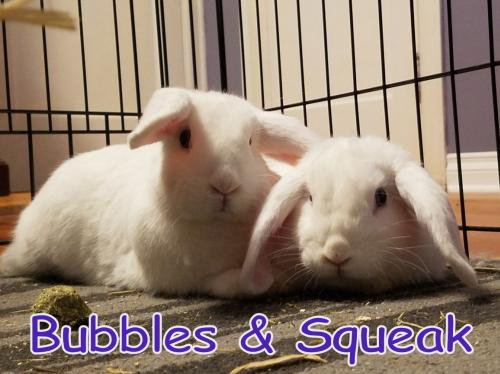 Bubbles (bonded to Squeak)