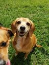 Carmie (Bonded pair with Roxy)
