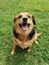 Roxy (Bonded pair with Carmie)