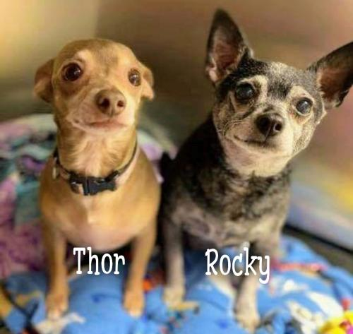Thor (bonded with Rocky)