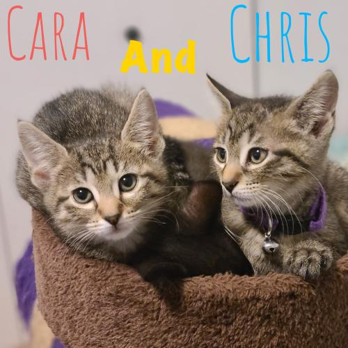 Cara and Christopher -cuddly kittens!