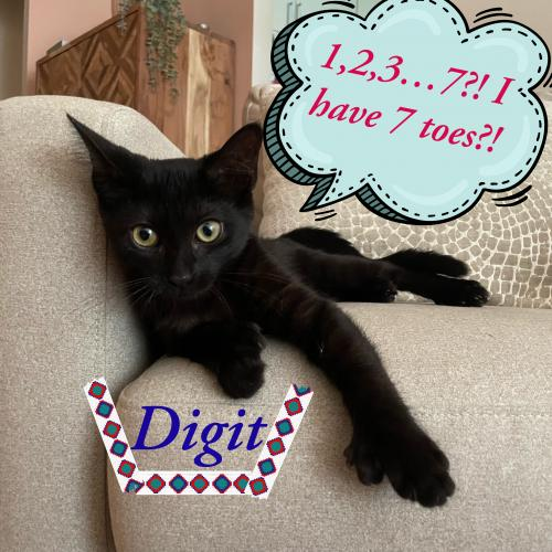 Digit the 7 toed polydactyl!