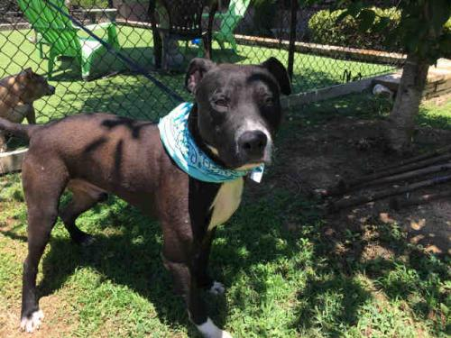Fulton County Animal Services - Adopt a Dog