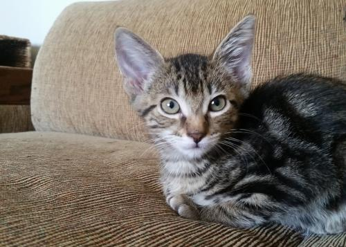 View Our Adoptable Kittens and Cats | 13th Street Cat Rescue | San