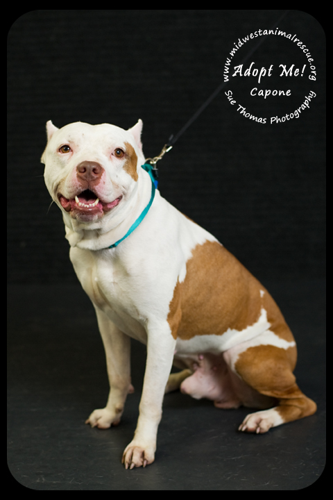 Capone- Foster Needed