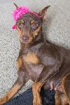 Angela-Urgent Foster Needed
