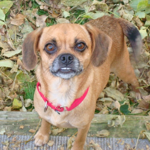 Christmas - Foster Needed