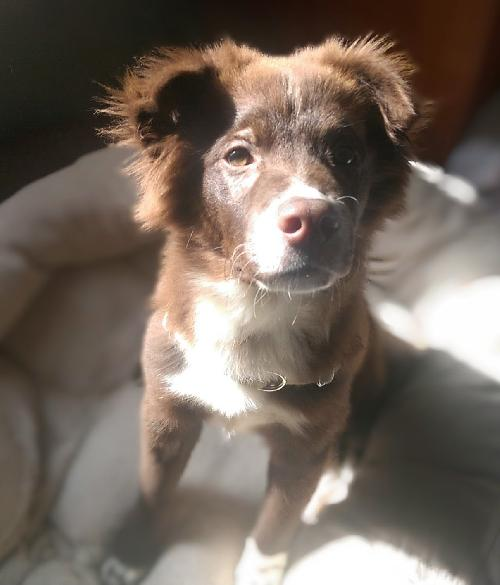 Freckles   Foster Needed