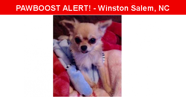Lost In Winston Salem Nc 27103 Named Lobito Id 4401230 Pawboost