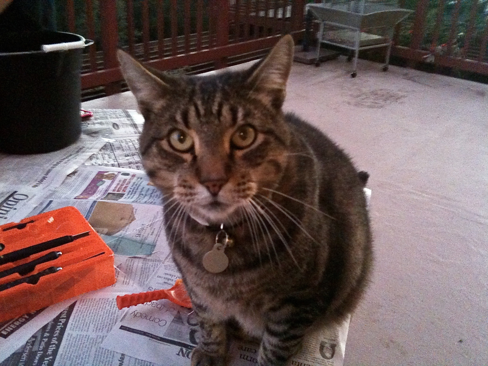 Lost Unknown  last seen N/A, Redwood City, CA 94062