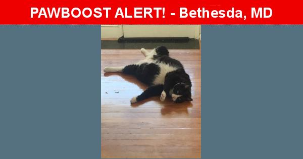 Lost Male  last seen Near Hartsdale Avenue, Bethesda, MD, Bethesda, MD 20817