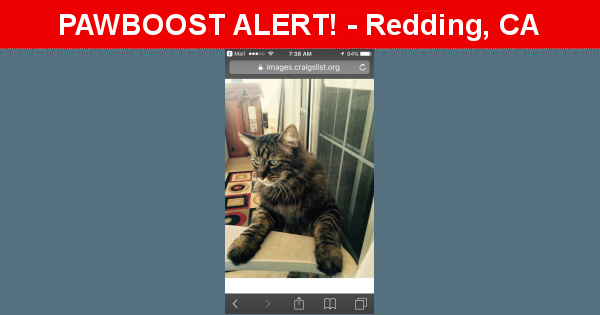 Lost In Redding Ca 96003 Named Taz Id 4506479 Pawboost