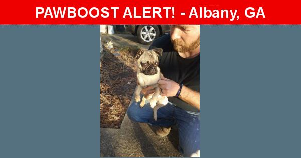 Found/Stray Male Dog in Albany, GA 31705 (ID: 4540825) | PawBoost
