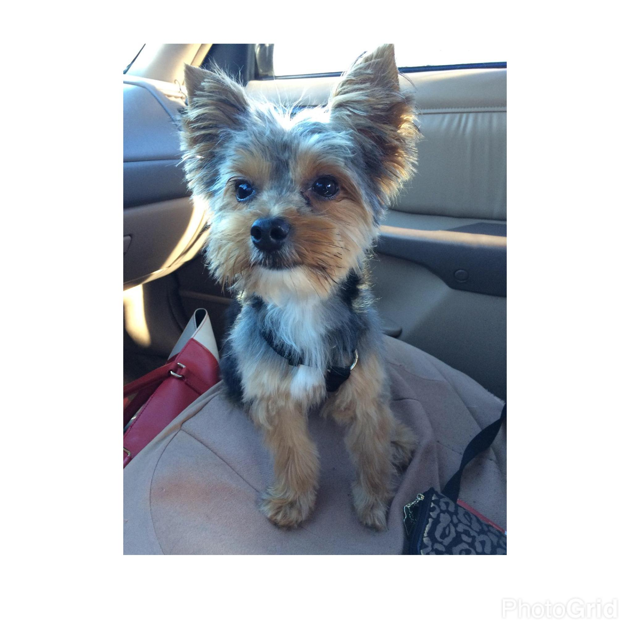 lost and found pets lost male dog last seen near lane columbia sc united states