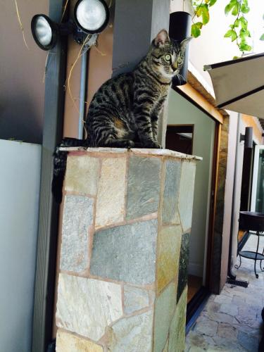 Lost cats home brisbane