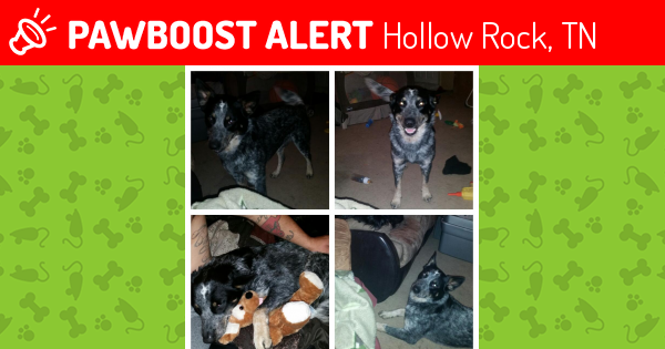 Lost Male Dog in Hollow Rock, TN 38342 Named Bruiser (ID: 4554922 ...
