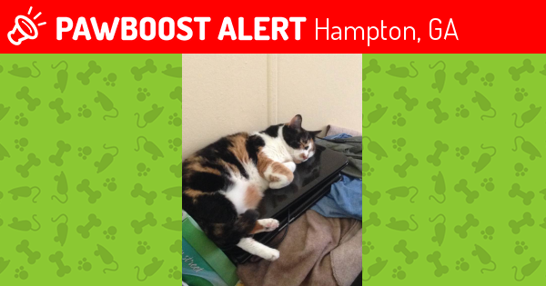 Lost Cat In Hampton GA 30228