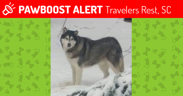 Lost Male Dog in Travelers Rest, SC 29690 Named Danger (ID
