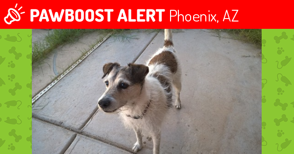 Deceased Male Dog last seen Near S 18th St, Phoenix, AZ, Phoenix, AZ 85042
