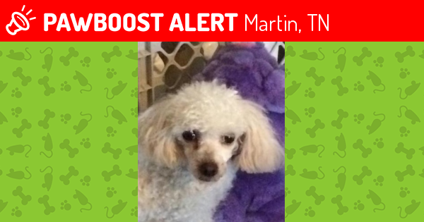 lost female dog in martin tn 38237 named sally id 4569977 pawboost