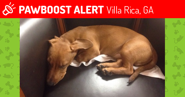 Happy Tails Villa Rica