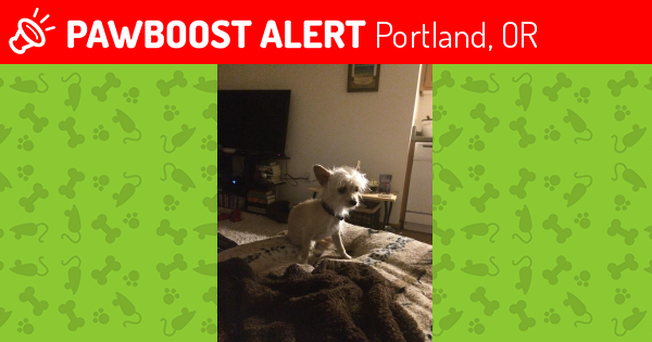 Lost Male Dog last seen Near SE Ml King Blvd & SE Lincoln St, Portland, OR 97214