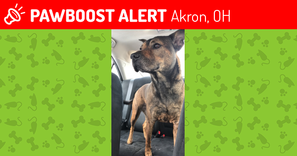 Found/Stray Female Dog last seen Near Canton Rd & Calvin Dr, Akron, OH 44312