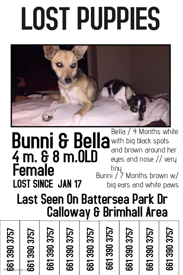 Doc683921 Missing Pet Template missing pet template 61 – Lost Dog Poster Template