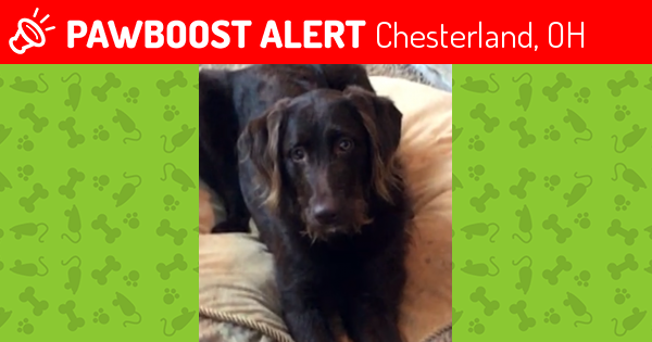 Lost Female Dog in Chesterland, OH 44026 Named Desi (ID: 4582459 ...