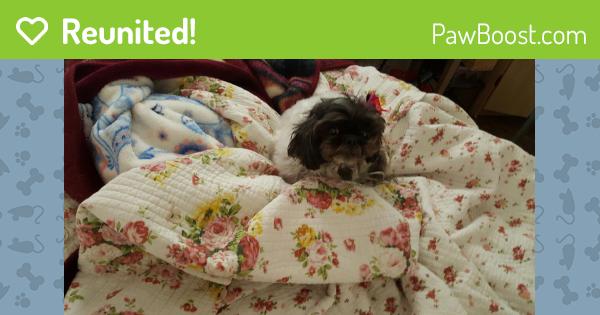 Reunited Female Dog In El Paso Tx 79925 Id 4575271 Pawboost