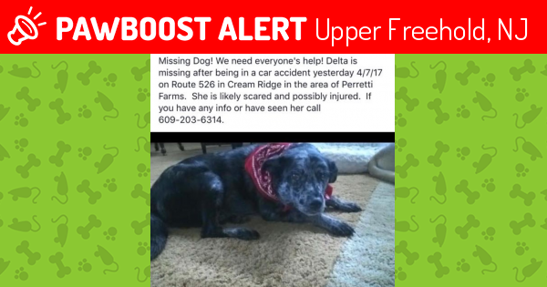 Lost female dog in upper freehold nj 08514 named delta for Motor vehicle nj freehold
